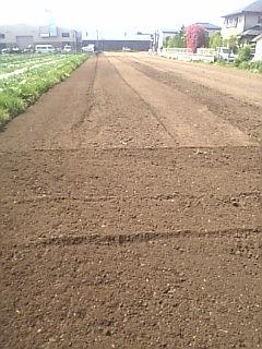 枝豆を植える準備終了