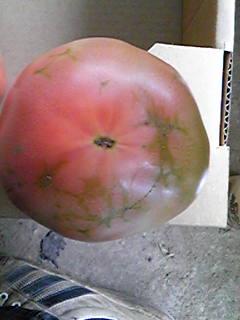 アザミウマが入ったトマトです