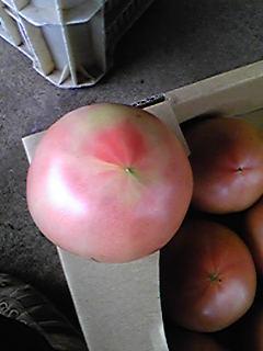 トマトのすじ腐れ果です