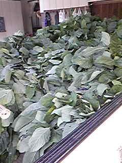 枝豆300本採ってきました