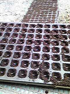抑制胡瓜の播種をしてます