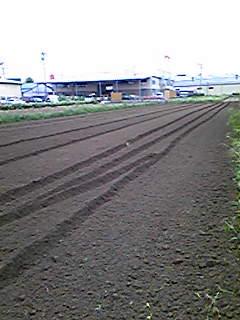 昨日収穫が終わったばかりですが