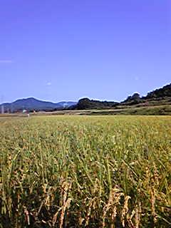 午後からは田んぼの草刈りでした