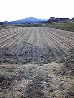 今日は田んぼの耕運をしてます