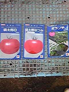トマトの播種をしました