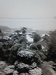 朝から雪になりました