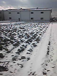 今日は暖かかったので雪も溶けてきましたが
