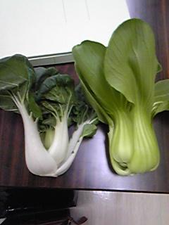 武蔵野種苗さんの野菜