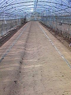 トマトを植える準備をしてます